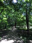 Durch den Wald..