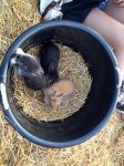 Die kleinen Kaninchen